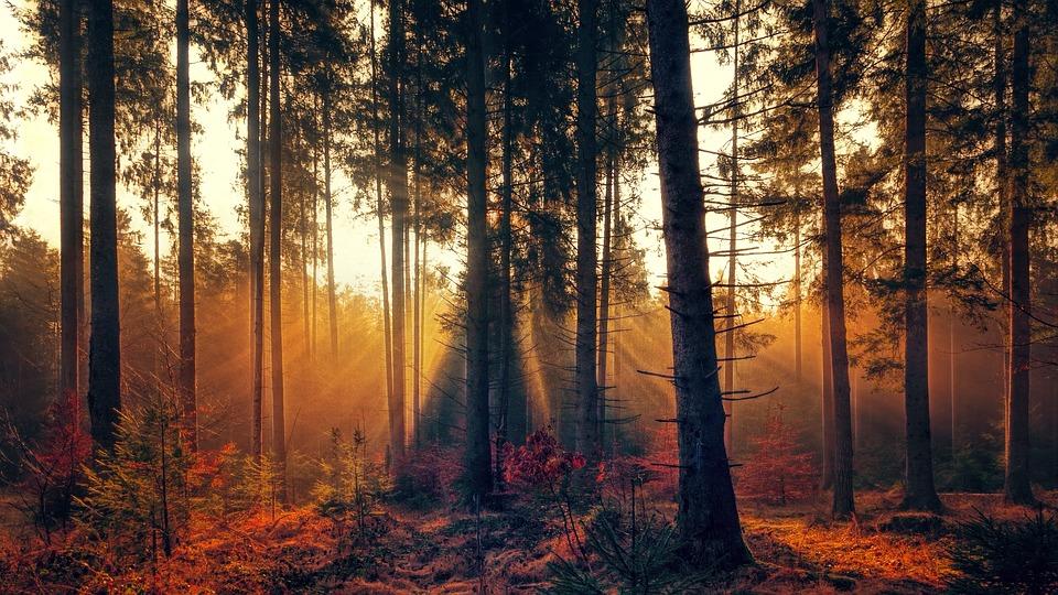 木々の隙間から朝日が差し込む森